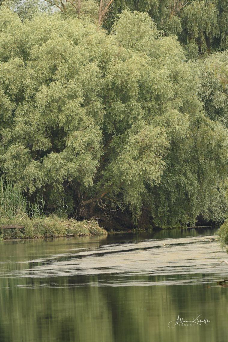 Donau Deltaet 19 1