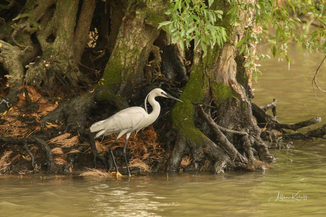 Donau Deltaet 31 3