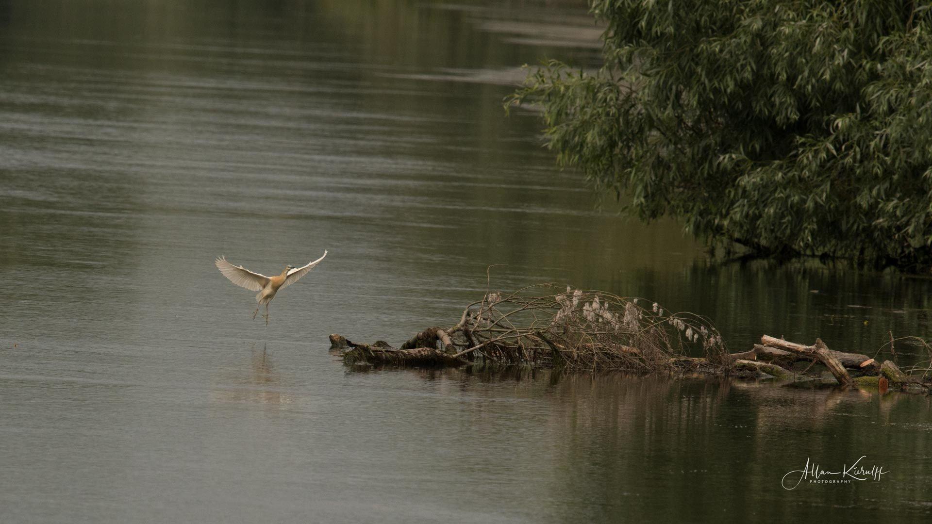 Donau Deltaet 35 4