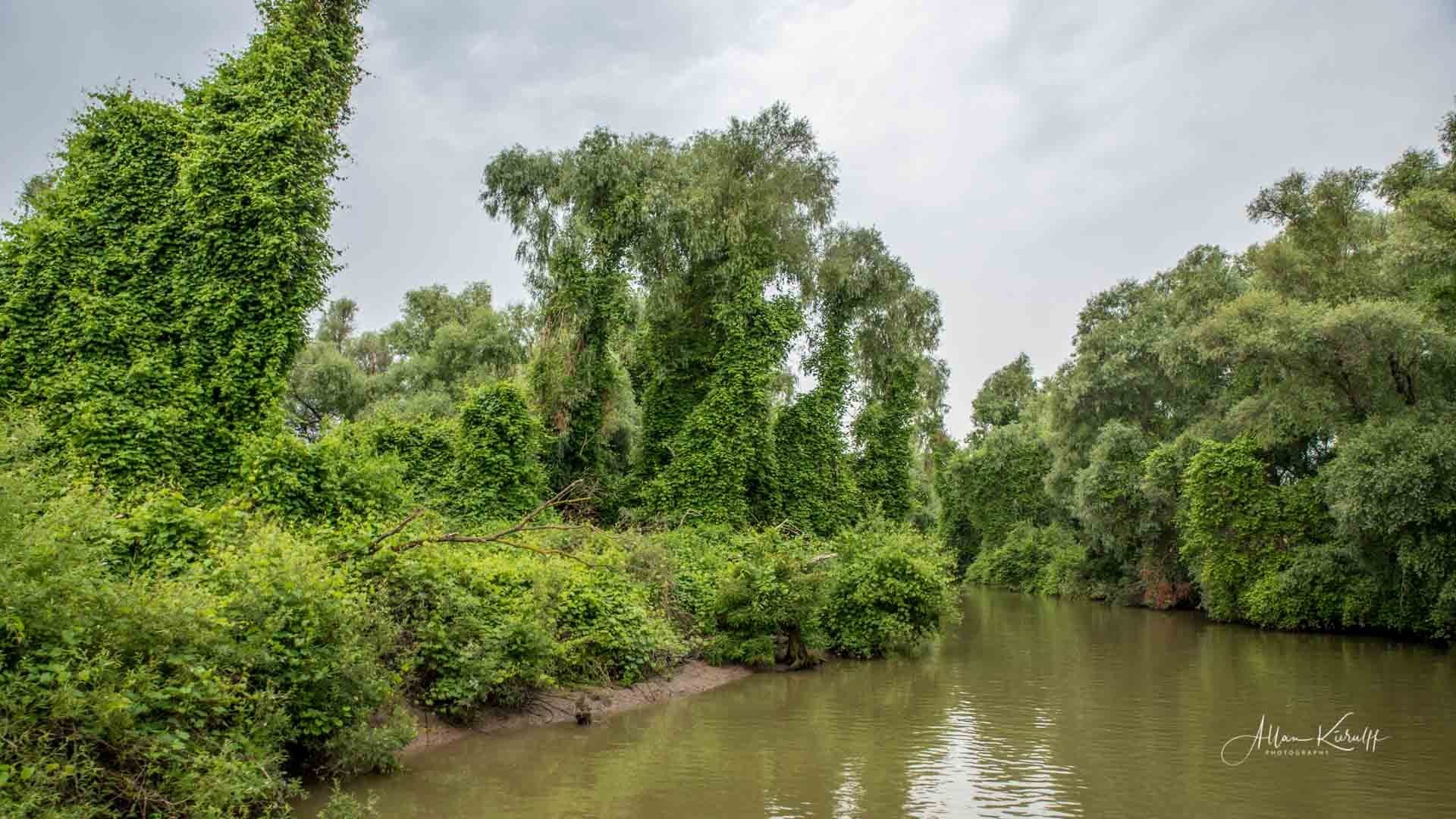 Donau Deltaet 49