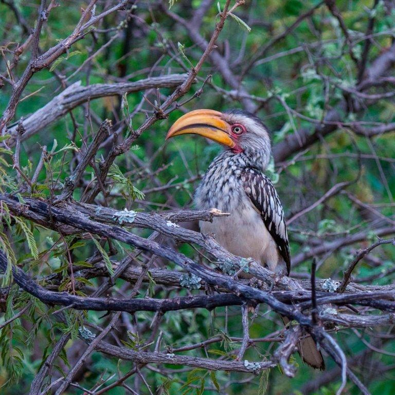 birds-around-the-world