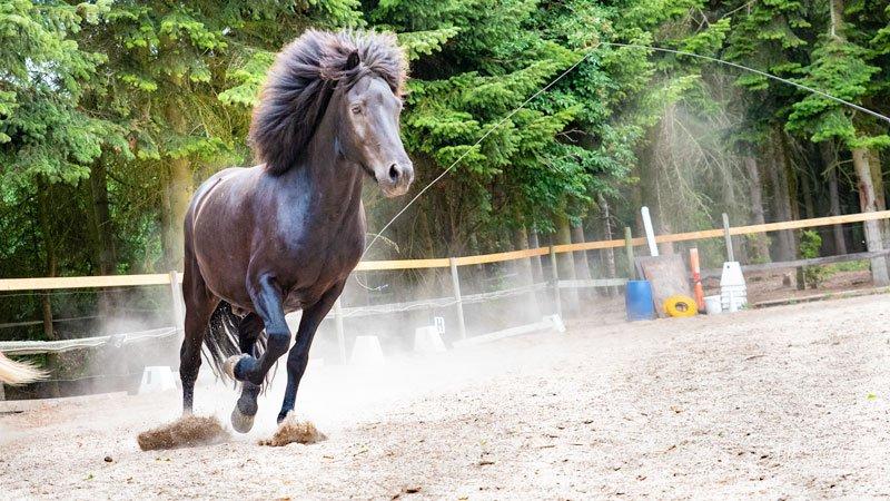 sort-hest-i-fart-i-hestefold