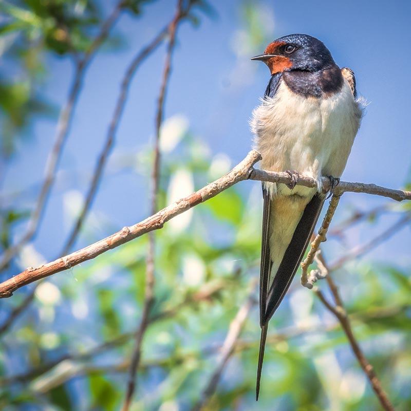Solvenien fugle 3