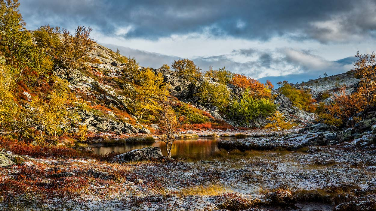 Dørålen Rondane Norge 4