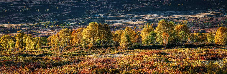 Grimsdalsvegen Norge 8