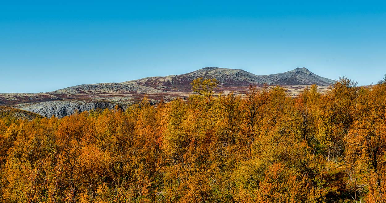 Rondane Nationalpark 5