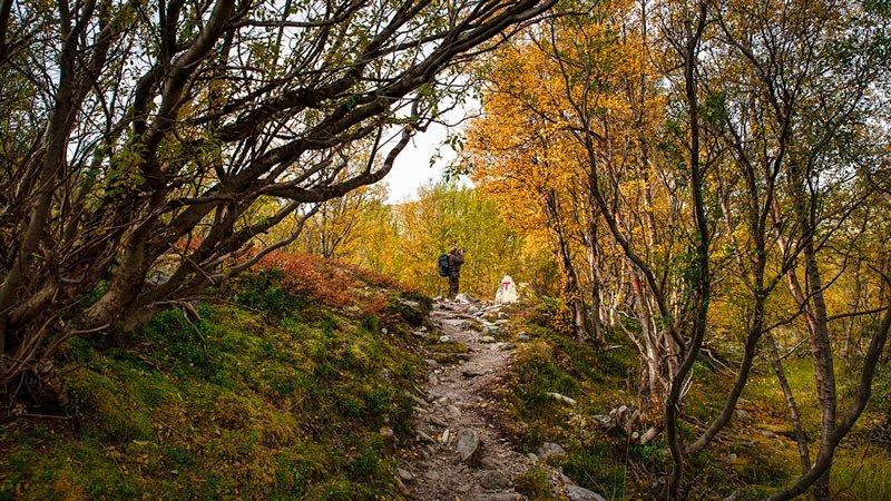 Rondanestien Norge 8