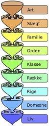 Det taksonomiske system t